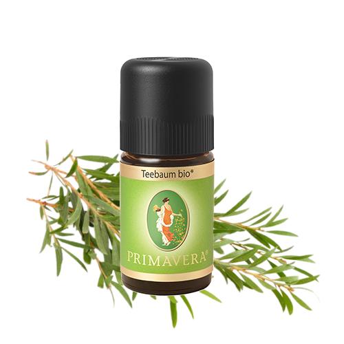 drzewo-herbaciane-olejek-eteryczny