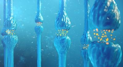 Synapsy - ilustracja ludzkiego układu nerwowego