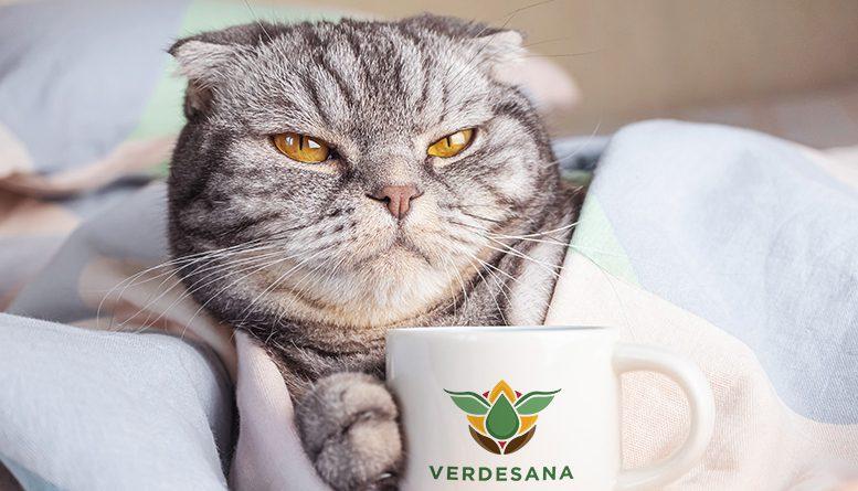Kawa z olejkiem CBD