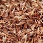 palmarosa-roslina